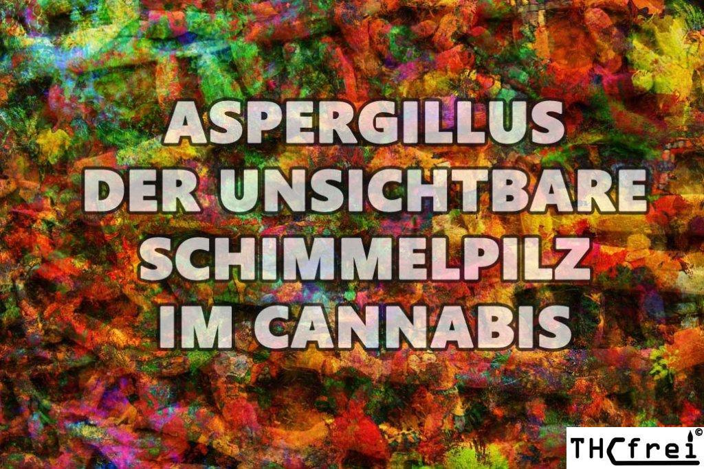 Aspergillus im Cannabis gefährlich für Cannabiskonsumenten