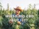 Ein Schweizer Bio-Landwirt mit Strohhut betrachtet die Nutzhanfpflanzen auf seinem Feld unter freiem Himmel CBD BIO ÖL